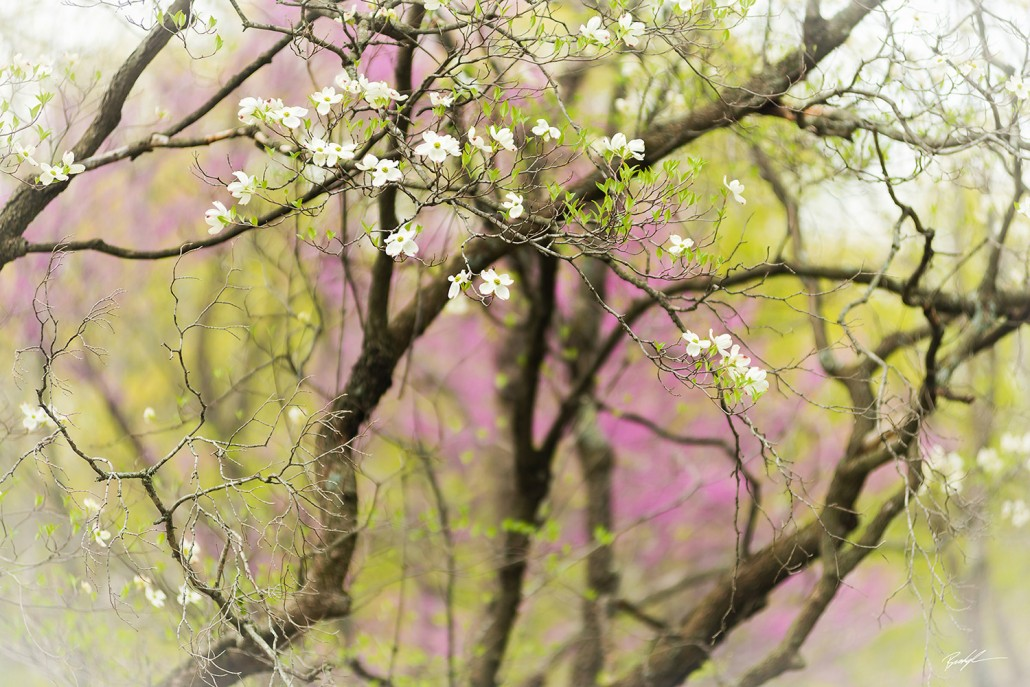 Dogwood Tapestry Pere Marquette State Park Illinois