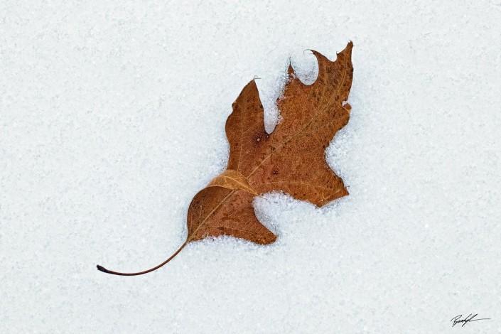 Last Leaf of Autumn Silver Lake Park Highland Illinois