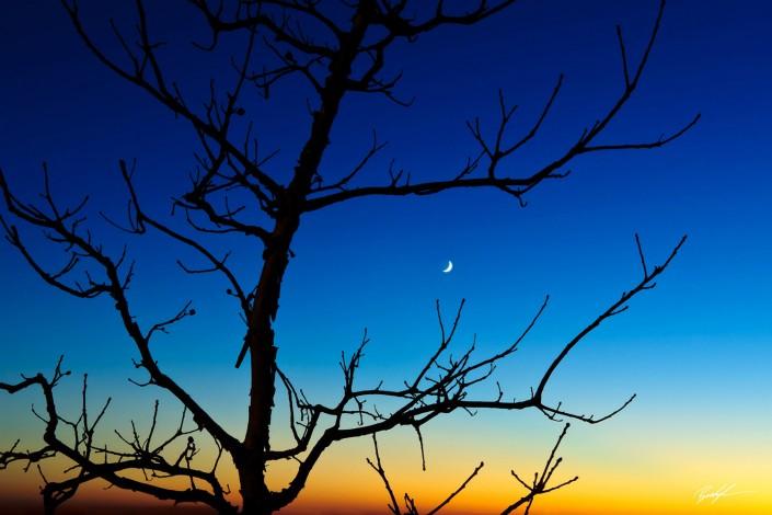 Tree Silhouette Sunset Illinois