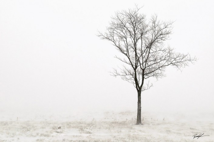 Single Tree in Snow