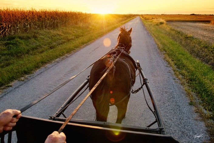 Horse Drawn Buggy at Sunset Bond County Illinois