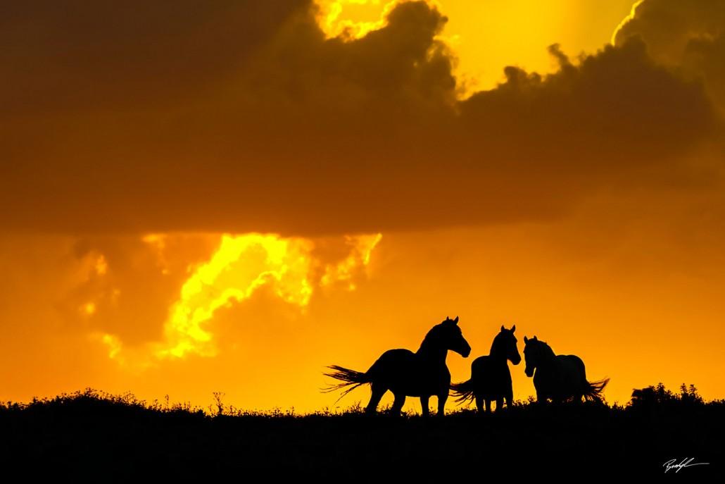 Three Horse Silhouette Flint Hills Kansas