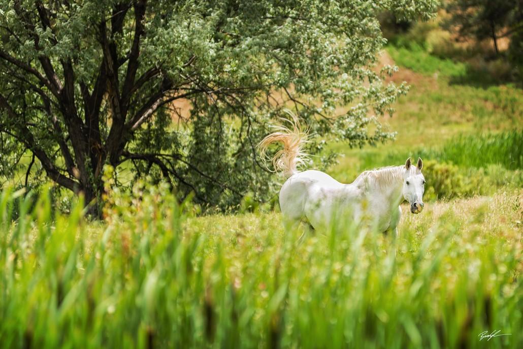 White Horse in Pasture Colorado