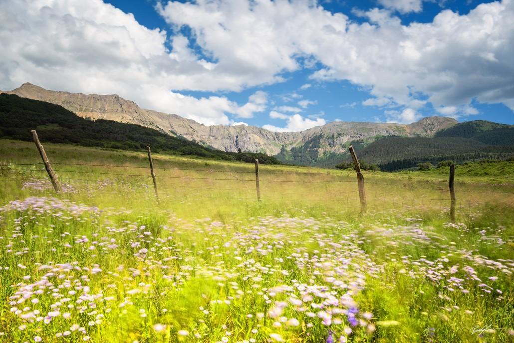 San Juan Mountains Wildflowers and Breeze Colorado