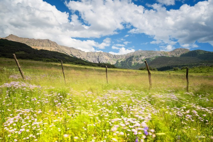 San Juan Mountains Wildflowers and Breeze Colorado
