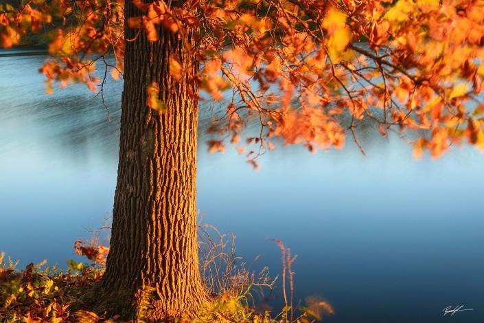 Sunset Tree and Breeze Silver Lake Highland Illinois