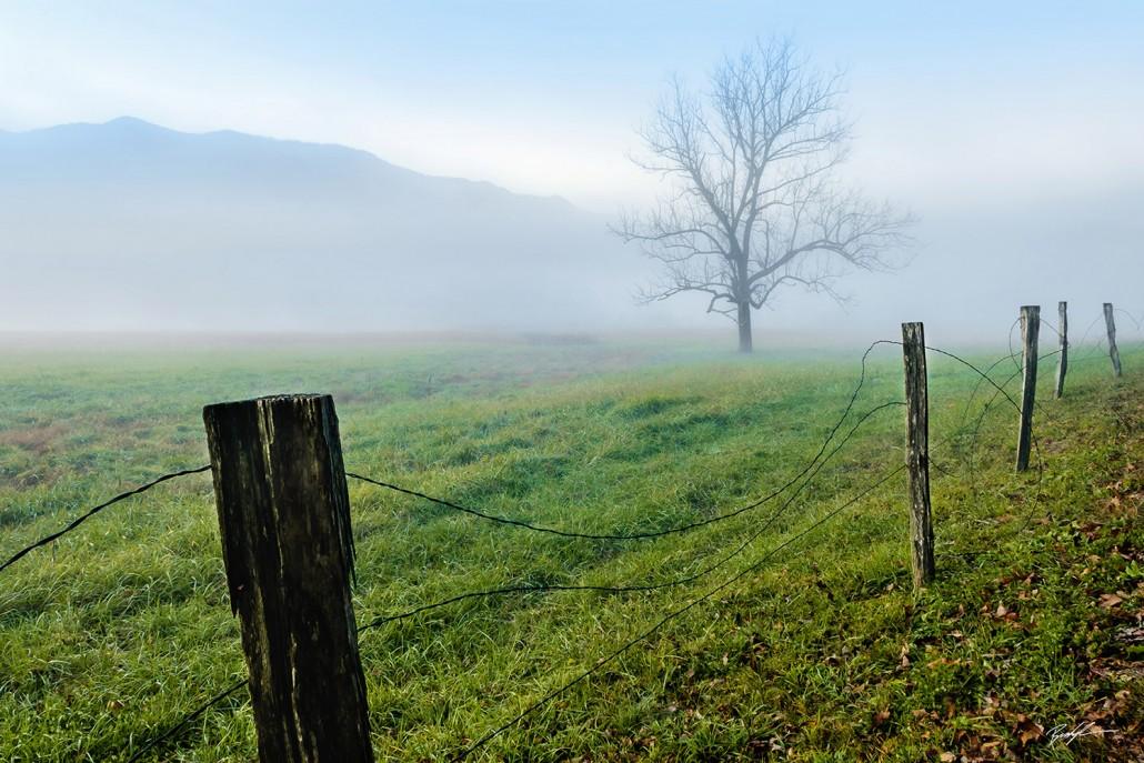 Tree Fence Fog Cades Cove Smoky Mountain National Park Tennessee