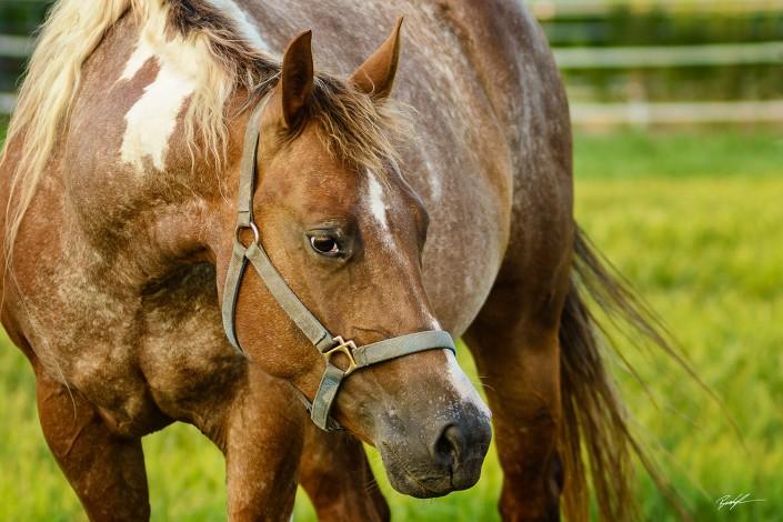 Horse Close Up Pasture