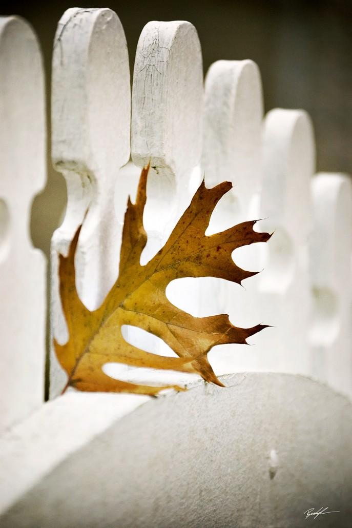 Pin Oak Leaf Country Fence Kentucky