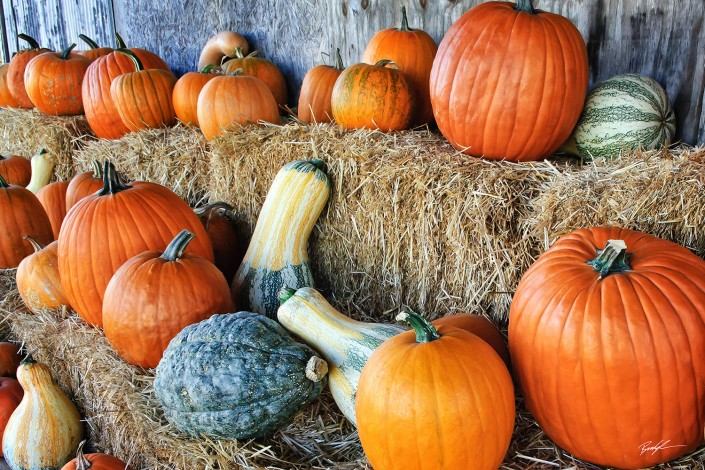 Pumpkins Gourds and Hay Bales