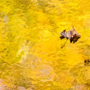 Autumn Foliage Reflection and Leaf Smoky Mountain National Park Tennessee