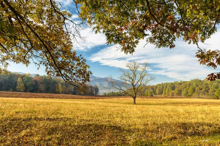 Cades Cove Meadow Smoky Mountain National Park Tennessee
