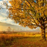 Golden Light Cades Cove Smoky Mountain National Park Tennessee