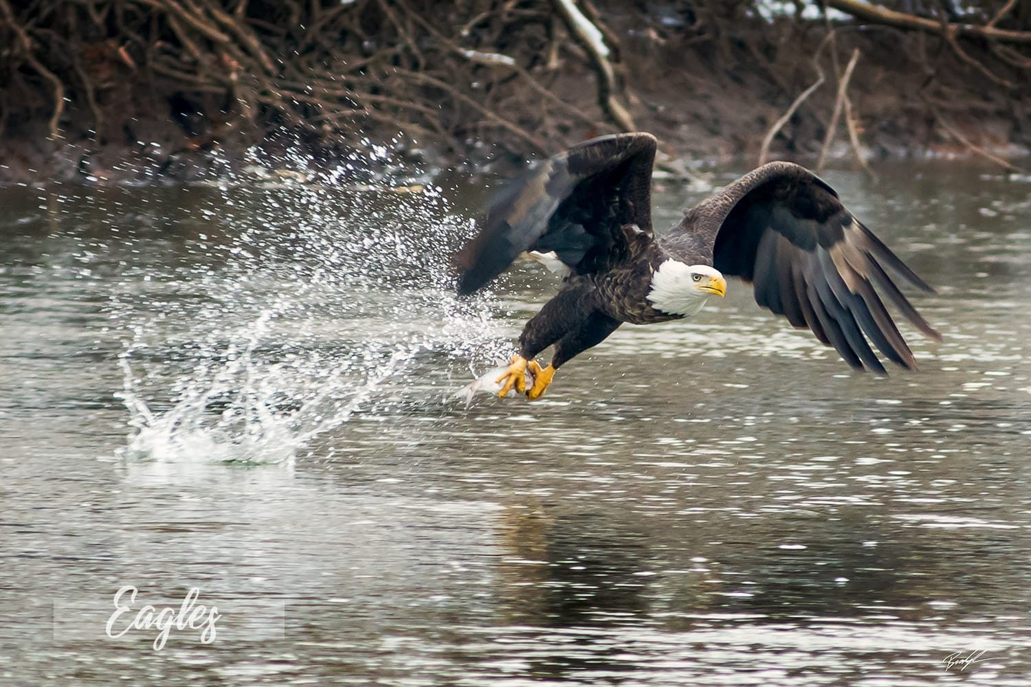 Home and Office Decor Eagle Photography