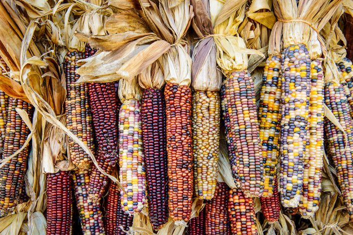 Indian Corn Cluster