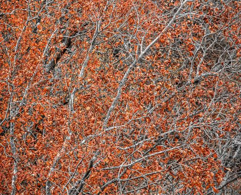 Burnt Orange Autumn Foliage Shawnee National Forest Illinois