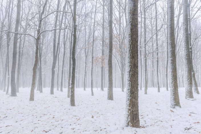 Snow and Trees Silver Lake Highland Illinois