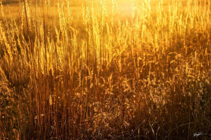 Sunlight Grass Pere Marquette State Park Illinois