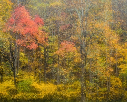 Autumn Trees Rain Smoky Mountain National Park Tennessee