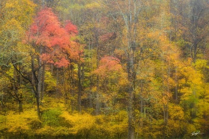 Autumn Trees Rain Smoky Mountain National Park Tennessee