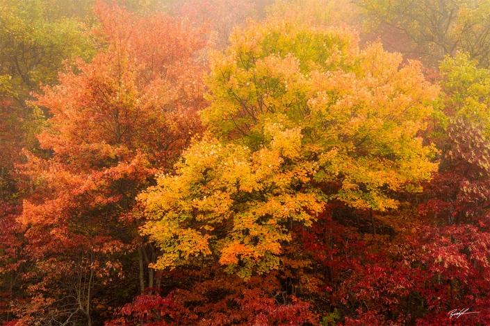 Autumn Trees Blue Ridge Parkway North Carolina