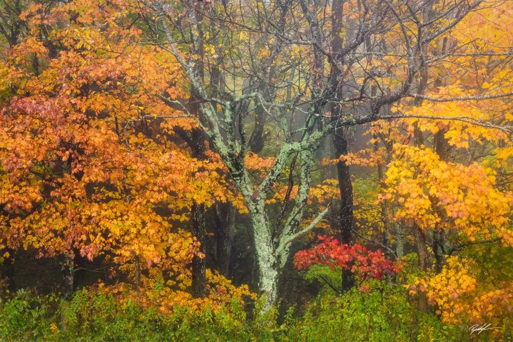 Autumn Trees Rain Blue Ridge Parkway North Carolina
