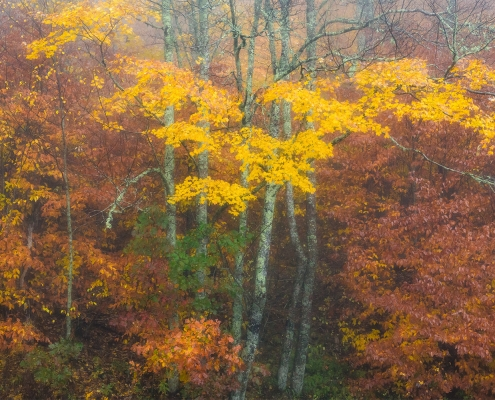 Autumn Trees Rain Blue Ridge Parkway North Carolina