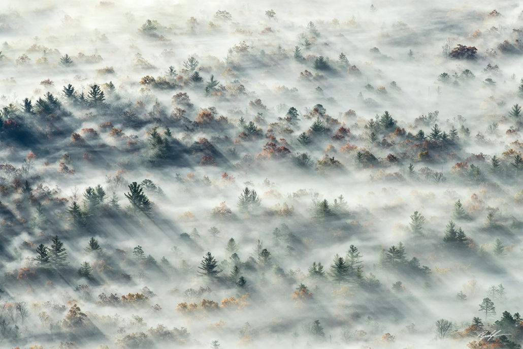 Trees Fog Valley Blue Ridge Parkway North Carolina