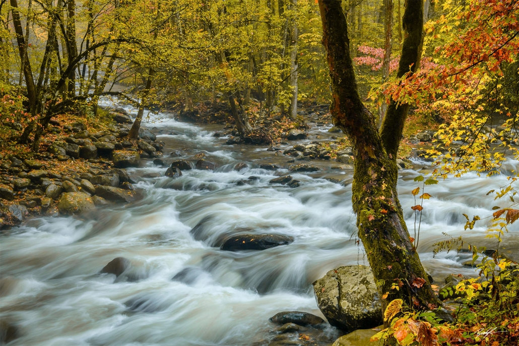 Greenbrier Smoky Mountain National Park Tennessee
