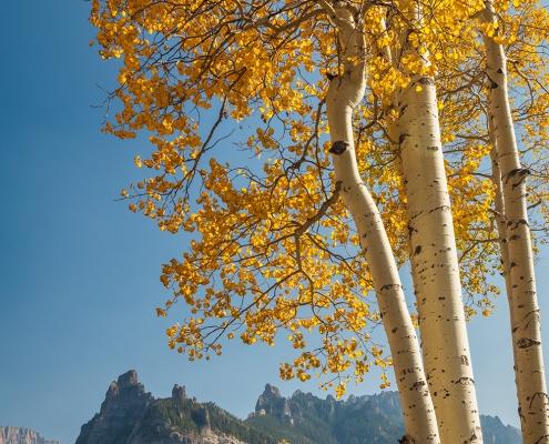 Aspens Cimarron Mountain Range Uncompahgre Colorado