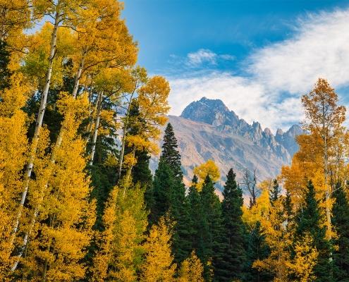 Aspens, Cimarron Range, Colorado