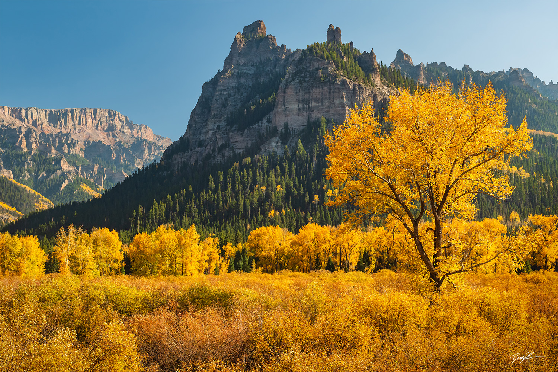 Cottonwood Tree Cimarron Range Colorado