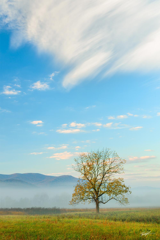 Cades Cove Tree Sky Smoky Mountain National Park Tennessee