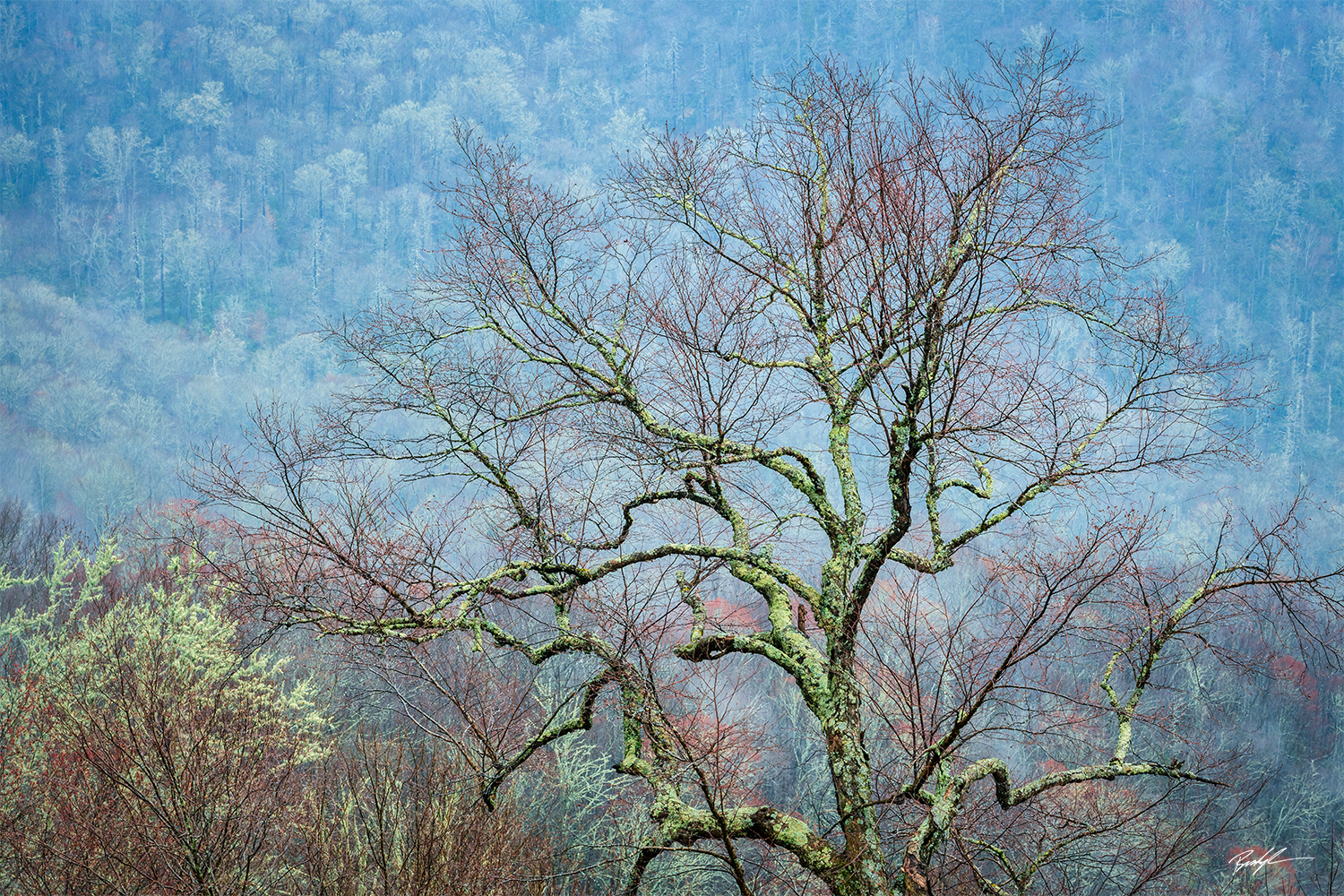 Trees and Mountains Smoky Mountain National Park Tennessee