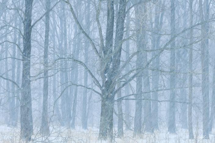 Winter Trees Snow Storm Eldon Hazlet State Park Illinois
