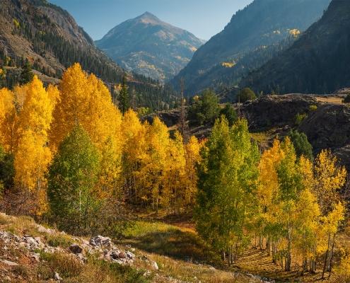 Aspens San Juan Mountains Ouray Colorado