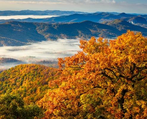 Morning Mist, Blue Ridge Parkway, North Carolina